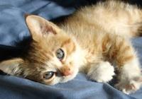 Kitten Wellness Programs