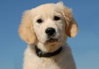 Puppy Wellness Programs