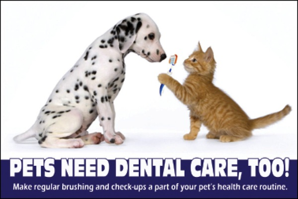 Pets Need Dental Care, Too!
